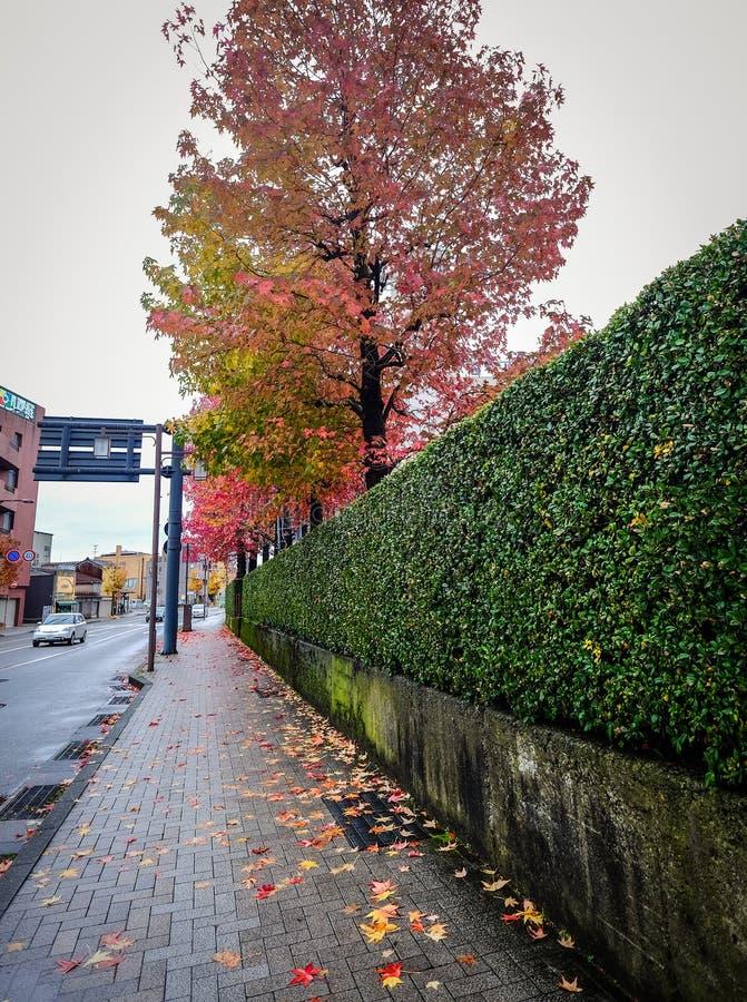 Paesaggio di autunno a Kyoto, Giappone immagini stock