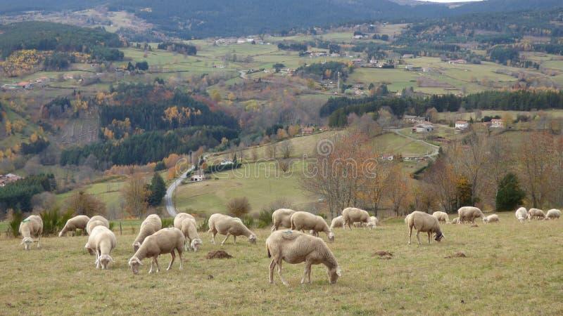 Paesaggio di autunno nel forez di livradois, auvergne Francia immagini stock libere da diritti