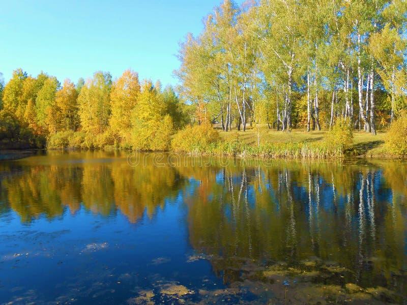 Paesaggio di autunno sullo stagno fotografie stock