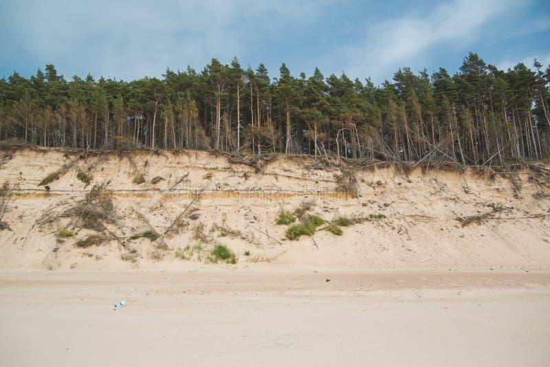 Paesaggio di bella costa del Mar Baltico con gli alberi fotografia stock libera da diritti