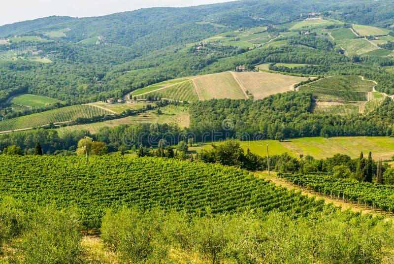 Paesaggio di Chianti vicino a Radda, con le vigne e di olivo fotografia stock