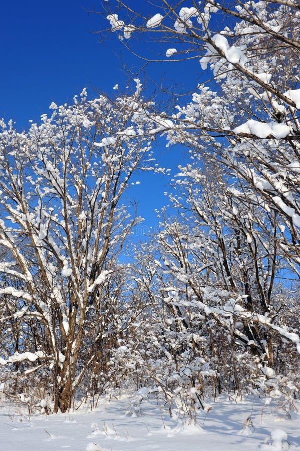 Paesaggio di congelamento della foresta di Snowy immagini stock libere da diritti