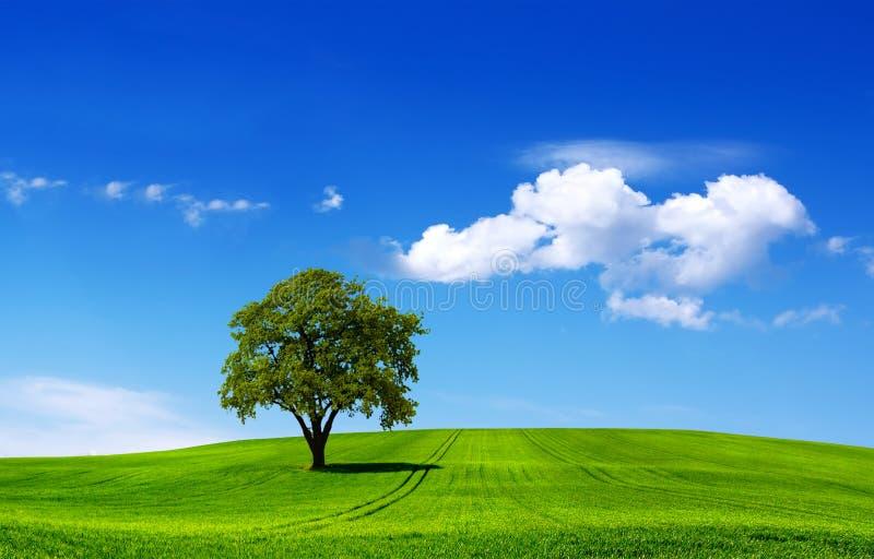 Paesaggio di Eco fotografia stock libera da diritti