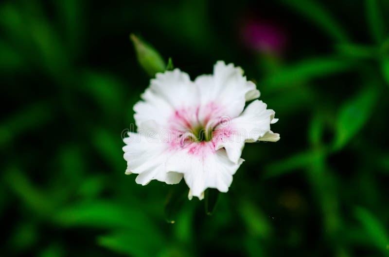 Paesaggio di estate con i fiori bianchi immagine stock libera da diritti