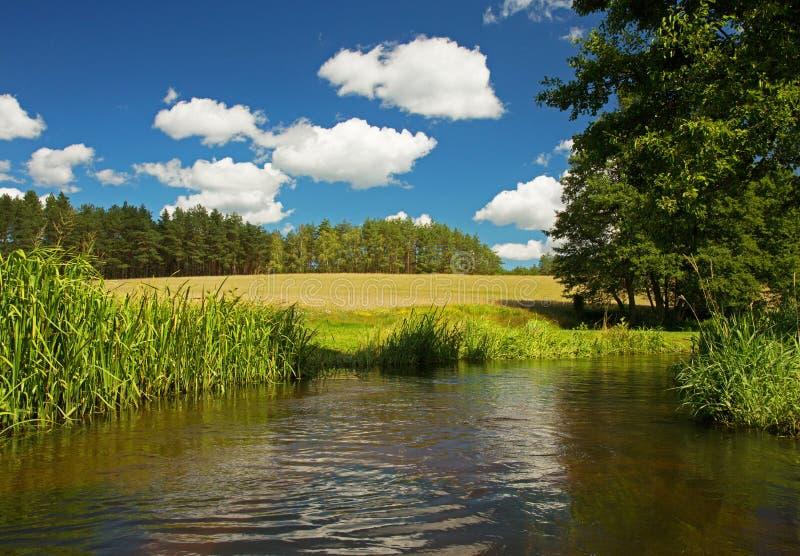 Paesaggio di estate con il fiume selvaggio sotto cielo blu immagine stock