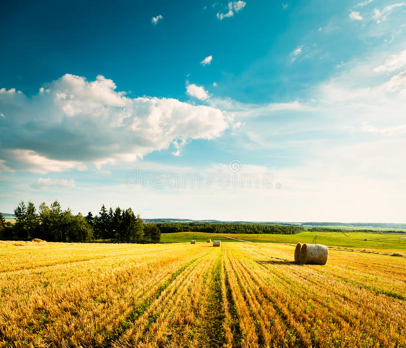 Paesaggio di estate con il giacimento e le nuvole di grano falciati fotografia stock libera da diritti