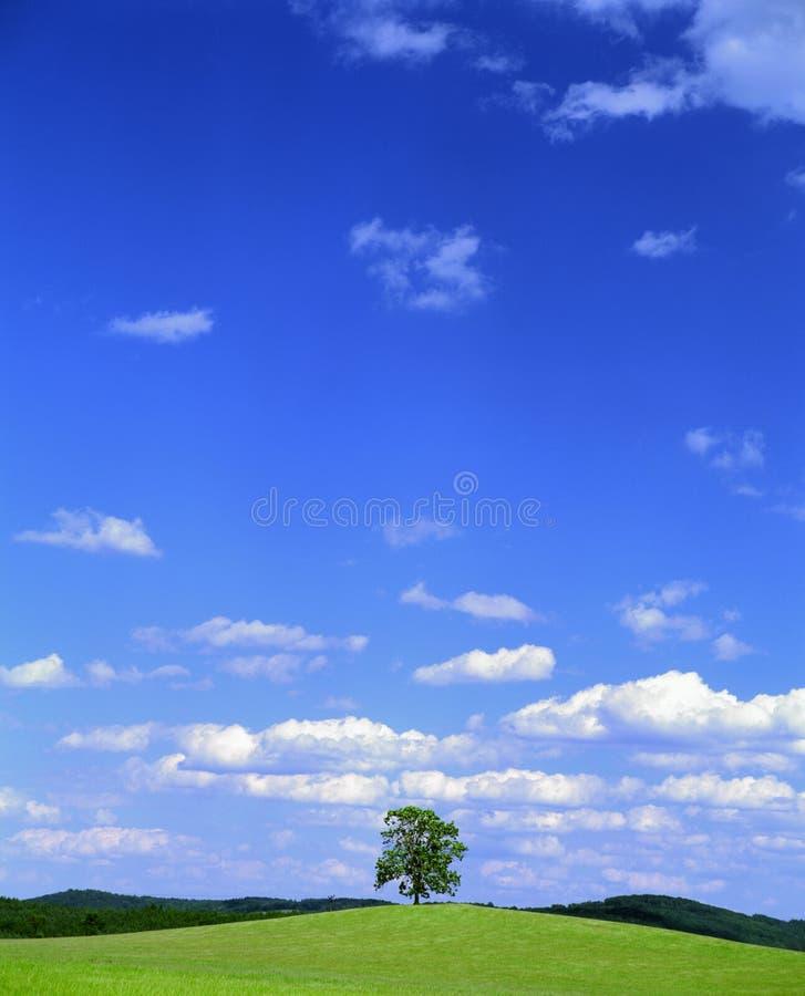 Paesaggio di estate con l'albero fotografie stock