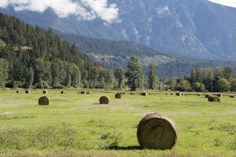 Paesaggio di estate con le balle e le montagne di fieno Hayfield vicino a Pemberton, Canada immagini stock libere da diritti