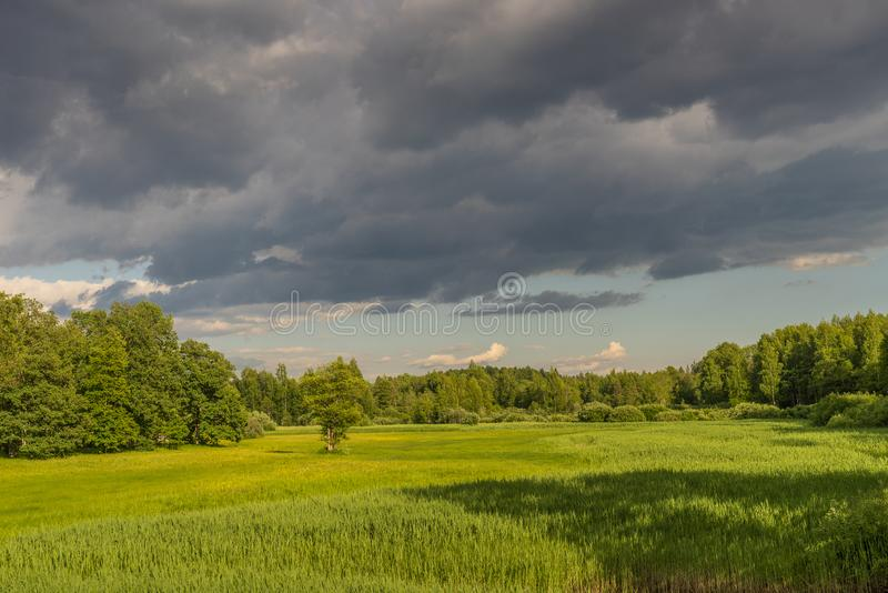 Paesaggio di estate del legno e del fiume verdi, invaso con le erbe selvatiche Prato circondato da una foresta mista immagini stock