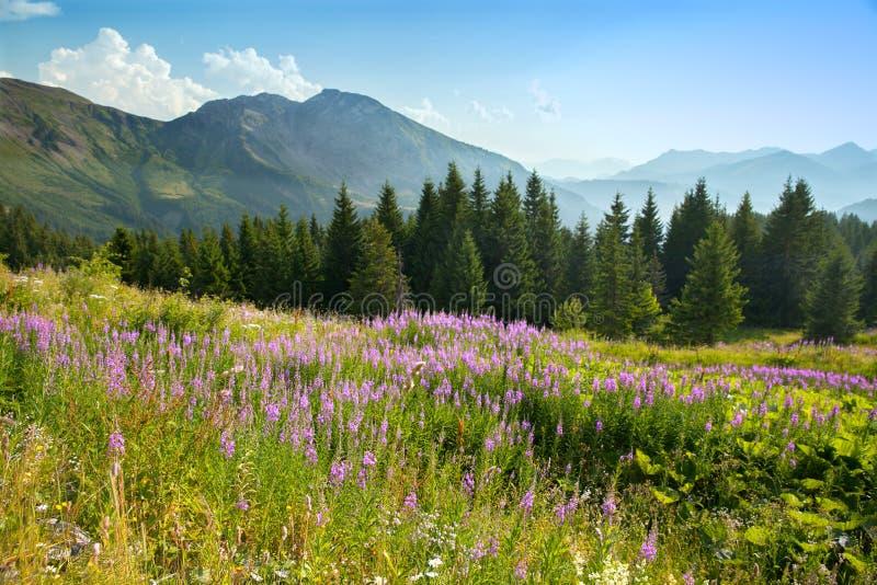 Paesaggio di estate della montagna immagine stock