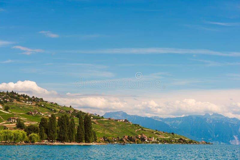 Paesaggio di estate delle vigne di Lavaux, del lago Lemano e delle alpi immagine stock libera da diritti