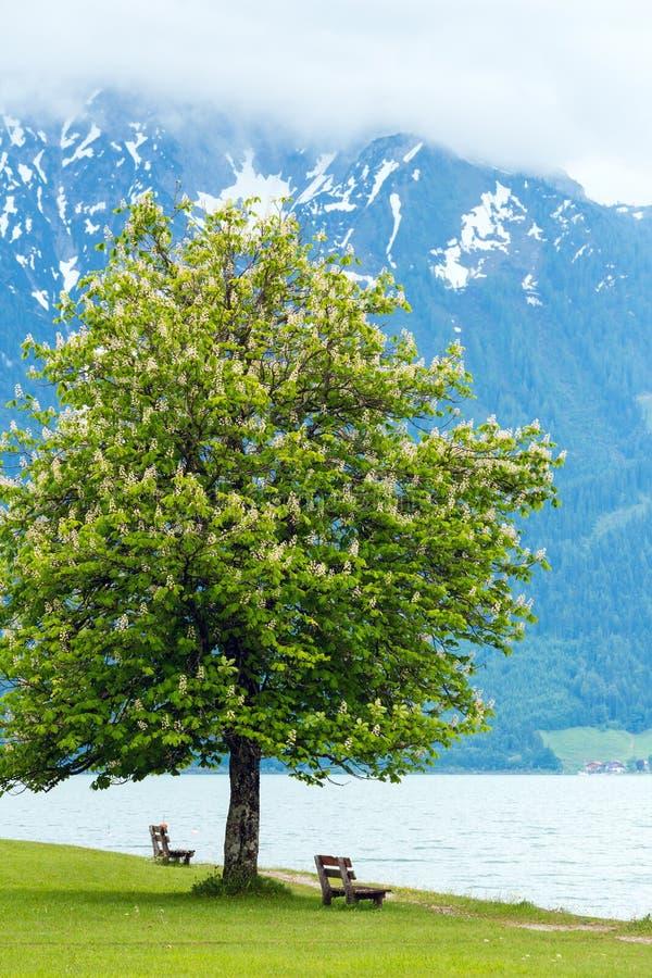 Paesaggio di estate di Achensee (Austria). immagini stock