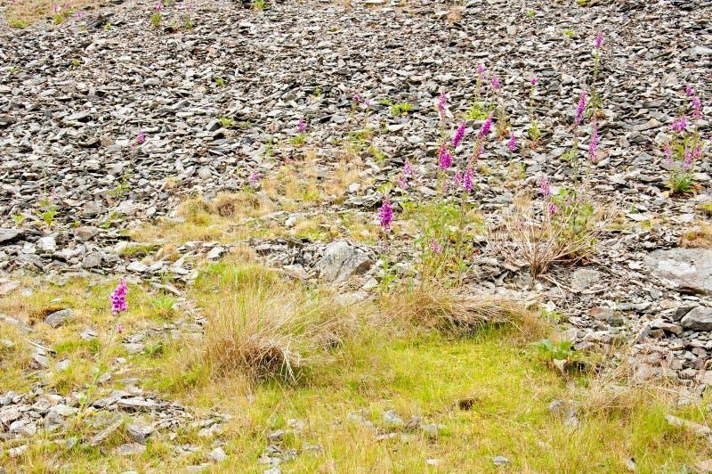 Paesaggio di estate ed alcuni fiori selvaggi nella valle di slancio fotografia stock