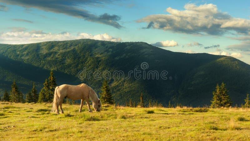 Paesaggio di estate in montagne carpatiche e nel cielo blu con le nuvole I hors pasce in un prato nelle montagne fotografia stock libera da diritti