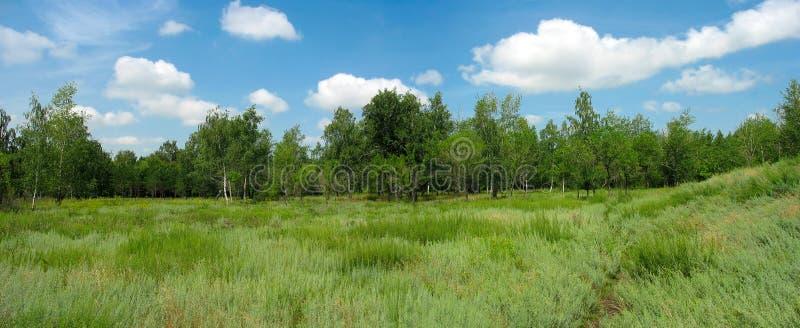 Paesaggio di estate nel parco. Panorama immagine stock libera da diritti