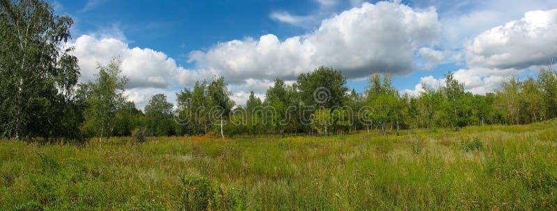 Paesaggio di estate nella sosta. Panorama immagine stock libera da diritti