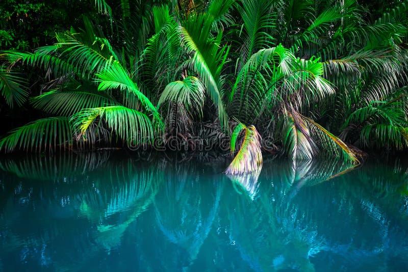 Paesaggio di fantasia del lago tropicale fotografia stock libera da diritti