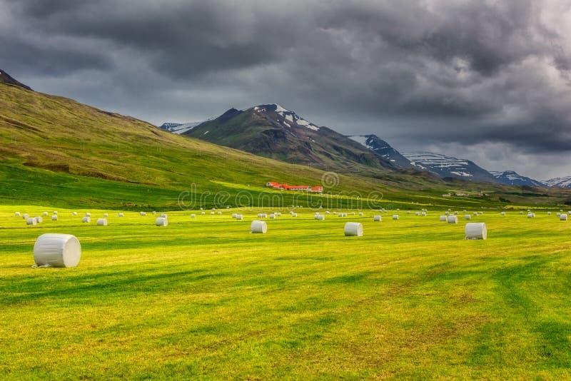 Paesaggio di giorno di estate islandese rurale con fieno falciato imballato, il campo verde, l'azienda agricola, le montagne ed i fotografia stock