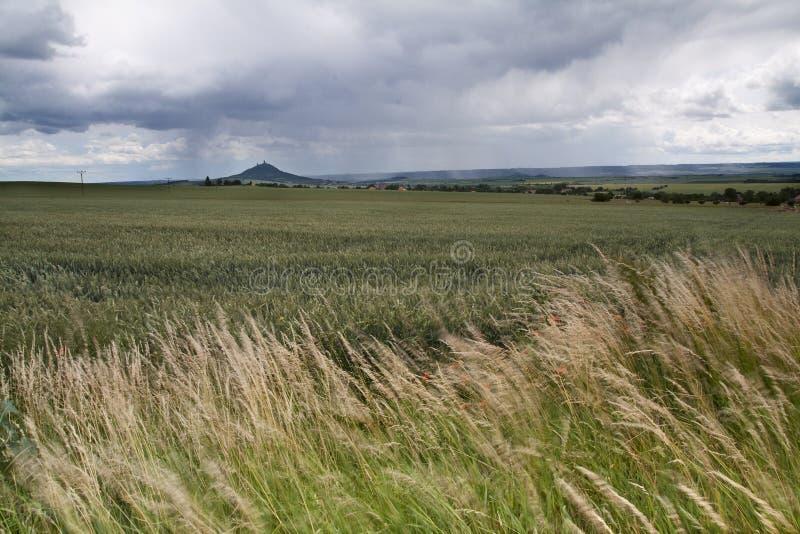 Paesaggio di grande giacimento di grano immagini stock