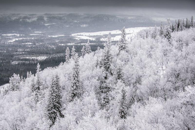 Download Paesaggio di inverno immagine stock. Immagine di scandinavia - 56892977