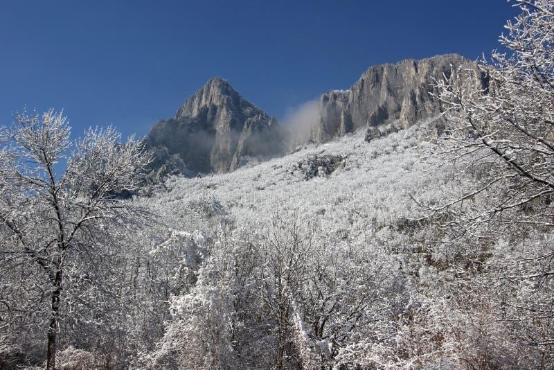 Paesaggio di inverno - alberi e rocce immagine stock
