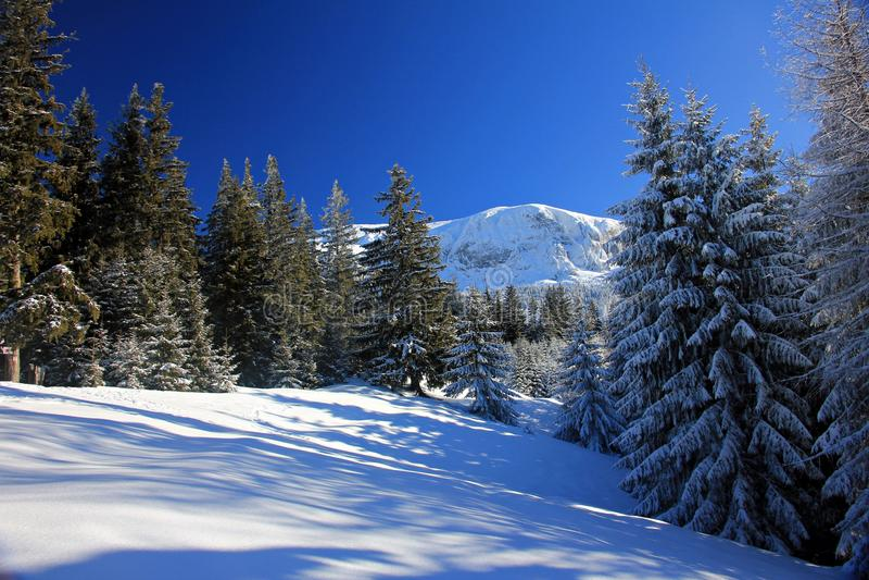 Paesaggio di inverno Alberi di pino coperti di neve fotografie stock