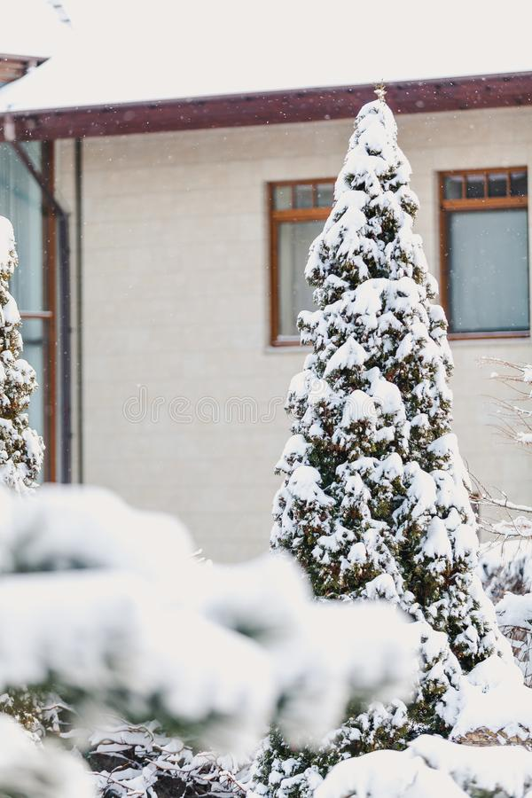 Paesaggio di inverno Albero innevato nel fondo della casa alta immagine stock libera da diritti