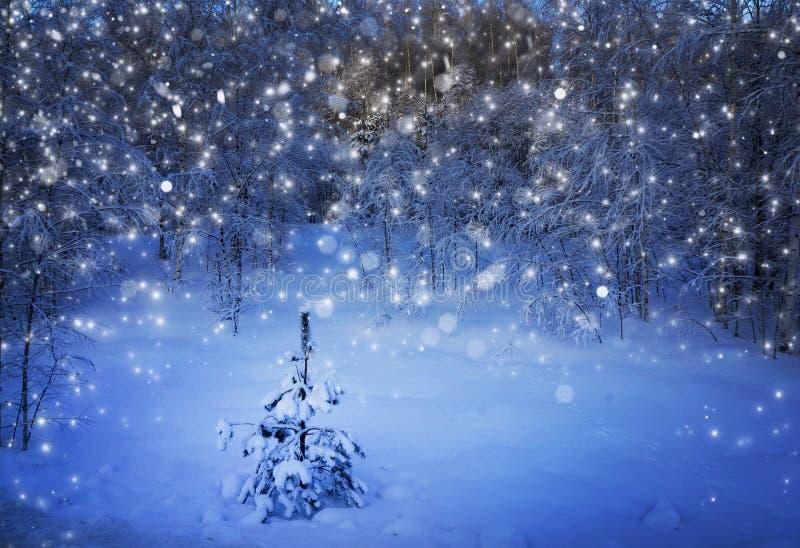 Paesaggio di inverno, albero di Natale in foresta fotografia stock