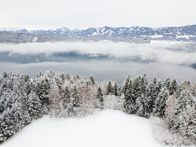 Paesaggio di inverno, campo innevato, pini, fondo dell'alta montagna fotografia stock
