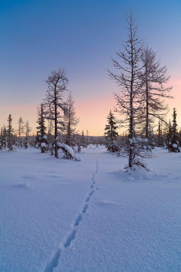 Paesaggio di inverno con alba fotografie stock libere da diritti