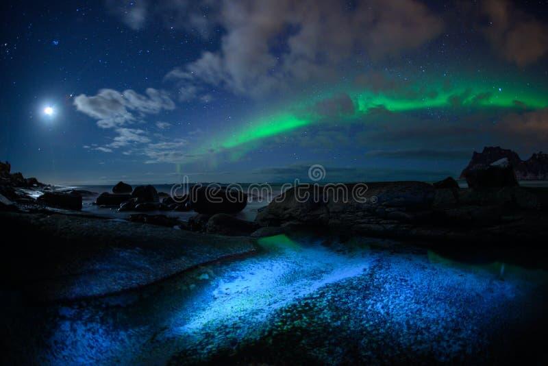 Paesaggio di inverno con Aurora Borealis e la luna piena luce nordica s nell'arcipelago di Lofoten, Norvegia immagini stock libere da diritti