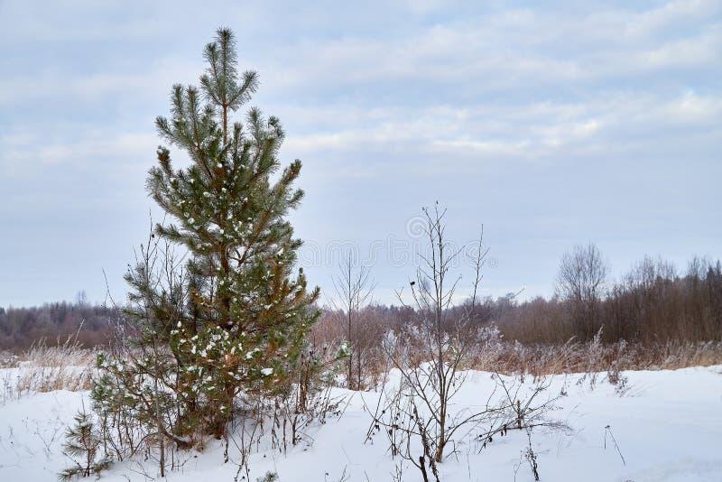Paesaggio di inverno con cielo blu e le nuvole bianche sopra il campo con neve e foresta sull'orizzonte immagini stock libere da diritti