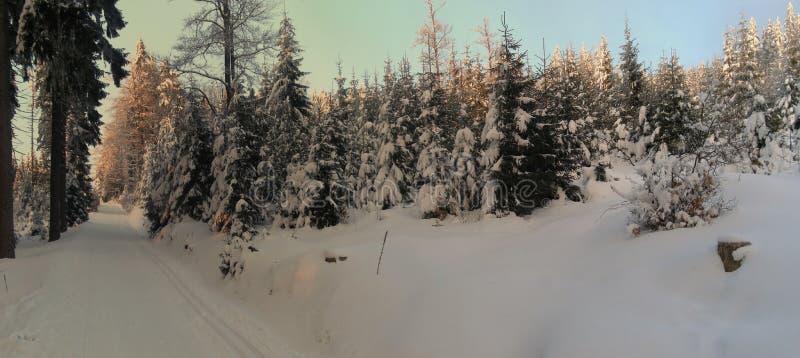 Paesaggio di inverno con gli alberi attillati innevati freschi fotografia stock libera da diritti