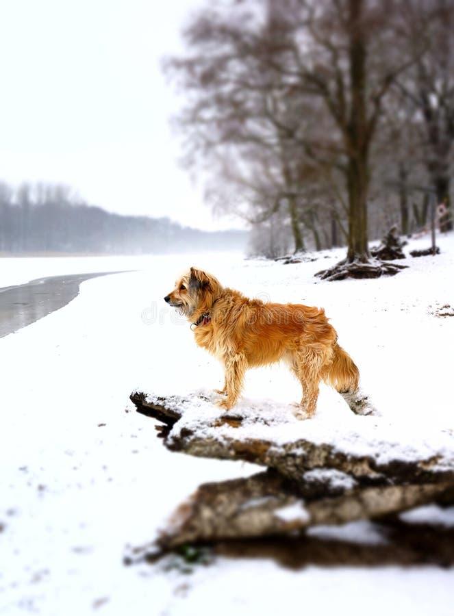 Paesaggio di inverno con il cane immagine stock