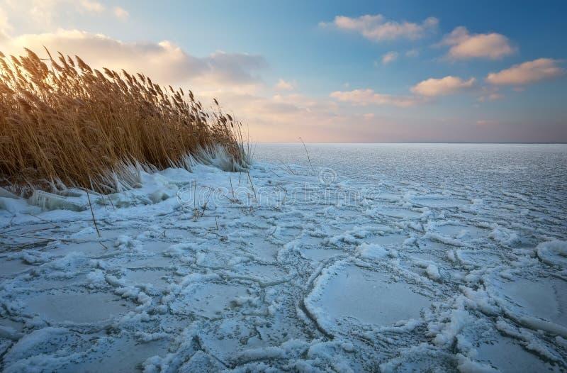 Paesaggio di inverno con il fiume e le canne congelati immagini stock libere da diritti