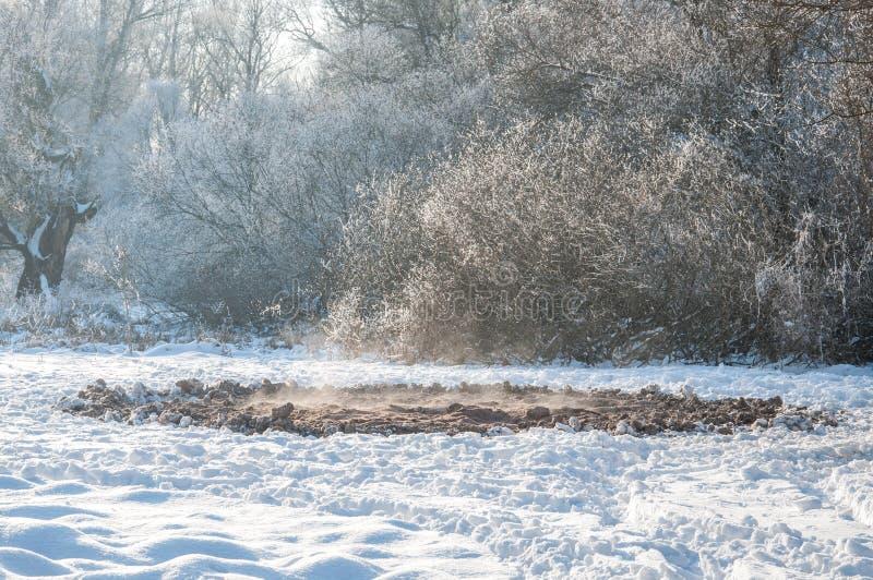 Paesaggio di inverno con il posto d'alimentazione del cacciatore fotografia stock libera da diritti