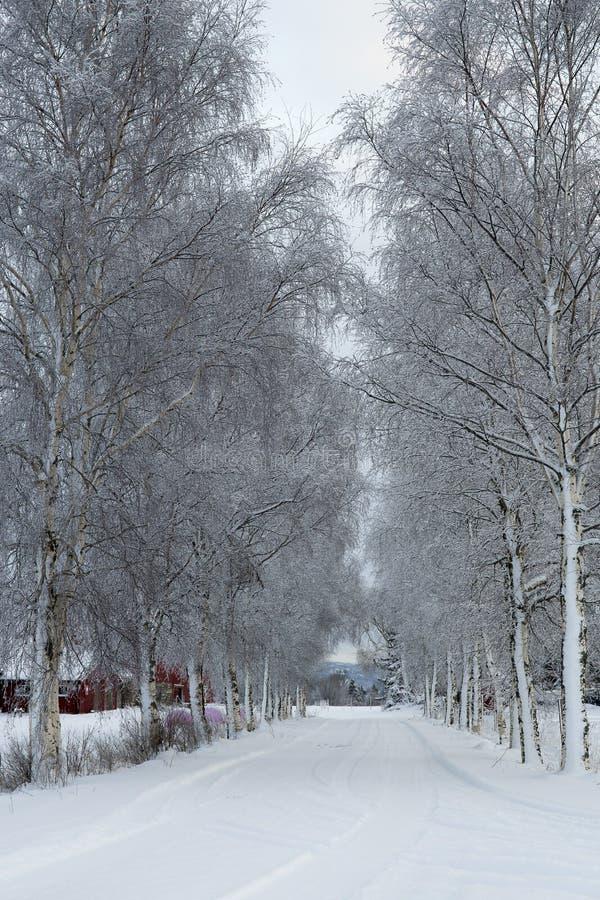 Paesaggio di inverno con il viale degli alberi, Norvegia fotografie stock libere da diritti