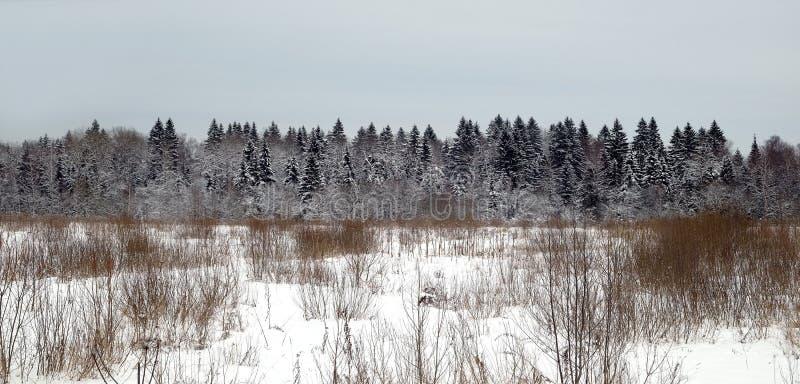 Paesaggio di inverno con la foresta di conifere dietro un campo innevato in un giorno di inverno freddo contro il cielo nuvoloso  fotografia stock
