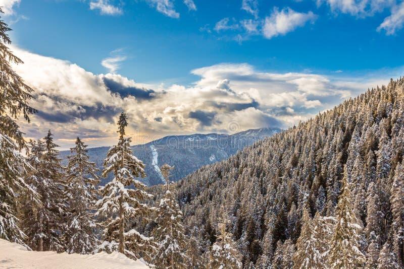 Paesaggio di inverno con la foresta nevosa alta nelle montagne in un giorno soleggiato fotografie stock