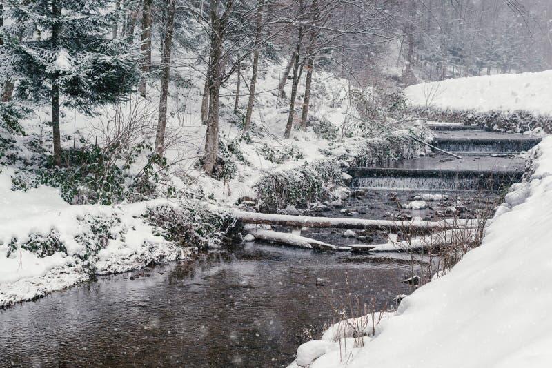 Paesaggio di inverno con lo stagno nel giorno nevoso natura della foresta coperta di neve Tempo nevoso di inverno Alberi di Snowy fotografia stock