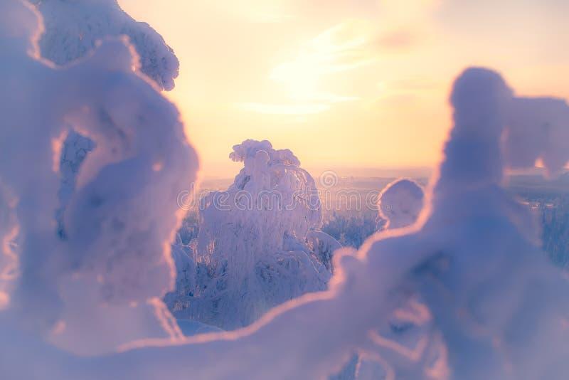 paesaggio di inverno da Sotkamo, Finlandia fotografia stock libera da diritti