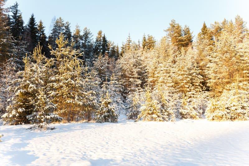 Paesaggio di inverno del bordo di un legno al sole immagini stock