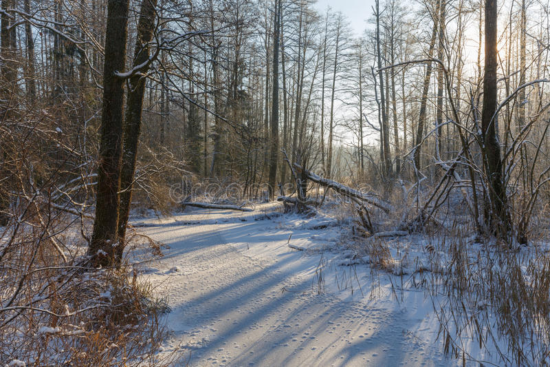 Paesaggio di inverno del fiume congelato di Lesna al giorno soleggiato fotografie stock