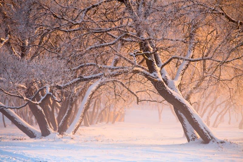 Paesaggio di inverno della città Stagione invernale fredda immagini stock