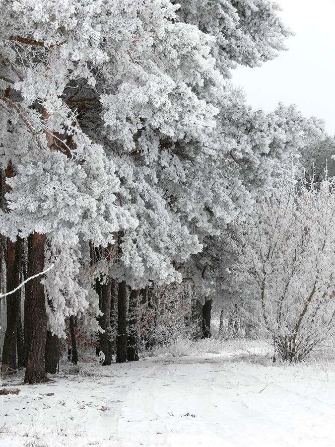 Paesaggio di inverno dello Snowy fotografia stock