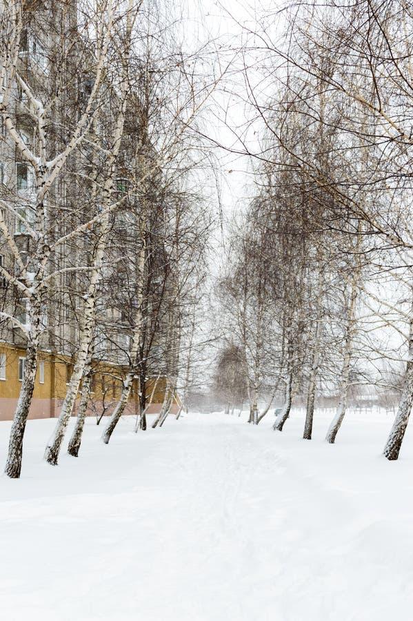 Paesaggio di inverno di Snowy della città Il percorso nella neve fra la betulla degli alberi immagini stock