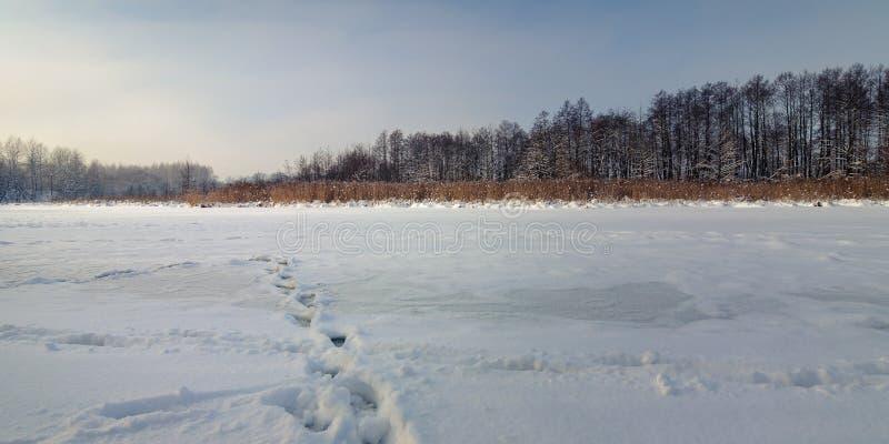 Paesaggio di inverno fiume congelato, lago sotto neve con le canne ed alberi nudi in bel tempo fotografie stock libere da diritti