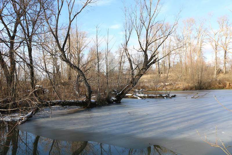 Paesaggio di inverno Il lago è coperto di ghiaccio con un albero che cresce nel mezzo nella neve fotografia stock libera da diritti