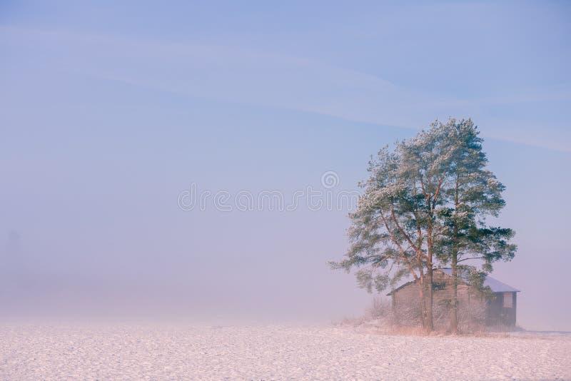 Paesaggio di inverno di mattina Alberi della neve e nebbia gelida sul campo immagine stock libera da diritti
