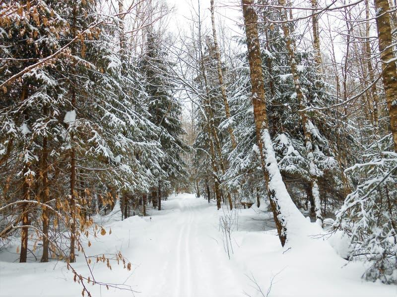 Paesaggio di inverno nel legno profondo fotografia stock